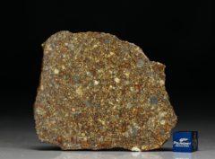 NWA 10297 (32.18 gram)