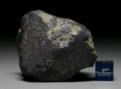 NWA 7317 (121.22 gram)