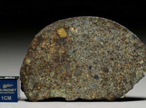 NWA 7161 (13.05  gram)
