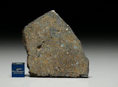 NWA 5497 (19.32  gram)