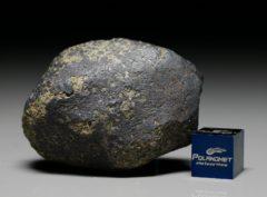 NWA 7317 (55.68  gram)