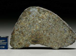 NWA 7161 (10.98  gram)