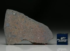 NWA 7167 (8.43 gram)