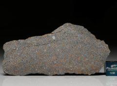 NWA 5498 (20.9  gram)