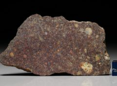 NWA 6257 (26.50 gram)