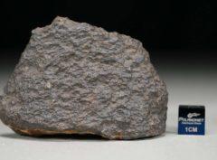 NWA 5498 (51.15 gram)