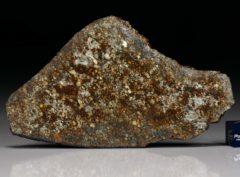 NWA 7162 (28.88   gram)