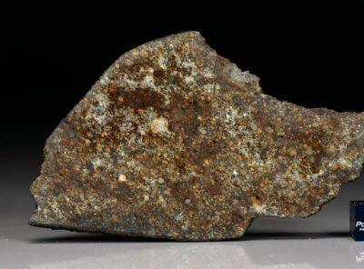 NWA 7162 (34.60  gram)