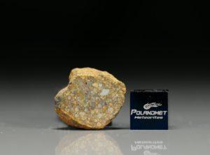 NWA 7813 (4.32  gram)