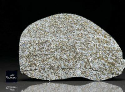 NWA 6255 (156.43 gram)