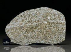 NWA 6255 (47.13 gram)