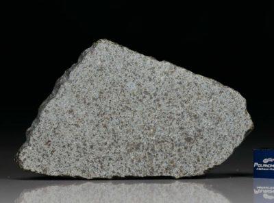 NWA 8095 (20.6 gram)