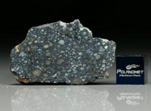 NWA 8323 (19.70 gram)