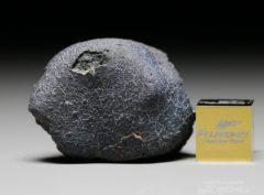 JBILET WINSELWAN (11.66 gram)