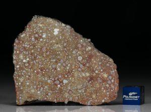 NWA 10378 (14.50 gram)