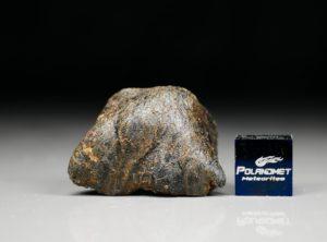 CAMEL DONGA (14.15 gram)