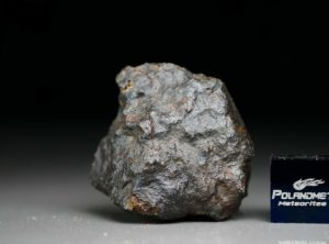 NWA 4835 (13.01 gram)