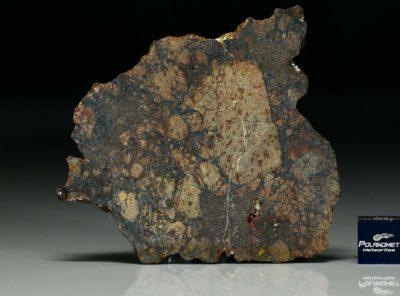 NWA 11742 (19.13 gram)
