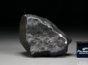 BENENITRA (48.21 gram)