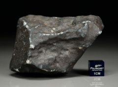 Ghdamis LIBYA FALL (192 gram)