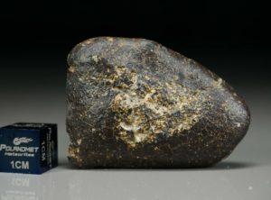 NWA 8372 (11.22 gram)