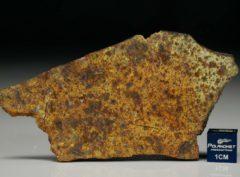 NWA 8324 (15.06 gram)