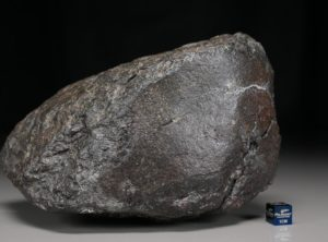 NWA 12675 (1555 gram)