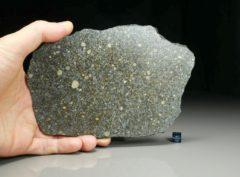 NWA 12263  (173.7 gram)