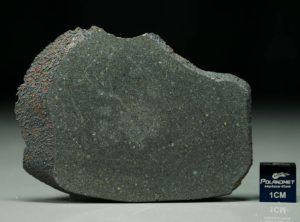 KAINSAZ (22.1 gram)