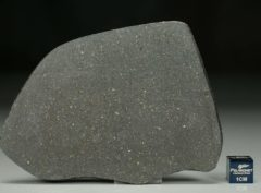 NWA 12816 (32.09 gram)