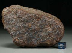 Dhofar 1652 [L6] (775 gram)