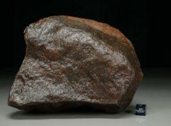 NWA XXX (2234 gram)