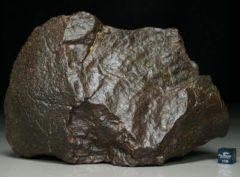 NWA XXX (1644 gram)