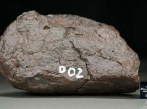 D02 (370 gram)
