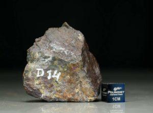 D14 (66 gram)