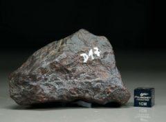 D17 (158 gram)