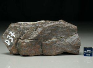 D37 (264 gram)