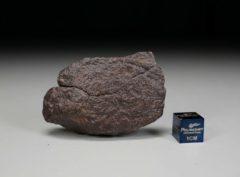D32F (38 gram)