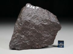 D32T (374 gram)