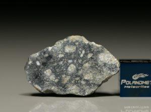 NWA 8647 (6.12 gram)