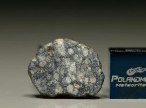 NWA 8647 (1.67 gram)