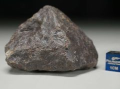 JaH091 (80.5 gram)