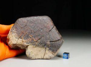 Dhofar 1655 B63 (1204 gram)