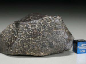 NWA 2698 (116.44 gram)