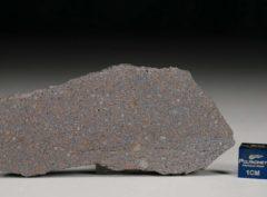 NWA 5498 (26.56 gram)