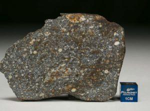 NWA 8305 (35.22 gram)