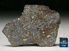 NWA 8305 (28.93 gram)