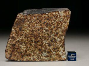 NWA 4558 (300.14 gram)