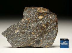 NWA 8305 (16.80 gram)