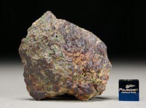 NWA 8251 (44.80 gram)